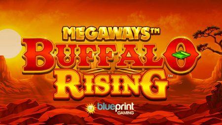 Blueprint Gaming adds Buffalo Rising Megaways to Jackpot King portfolio